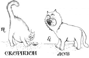 лев и дева совместимость по гороскопу
