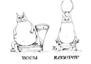 Козерог совместимость весами